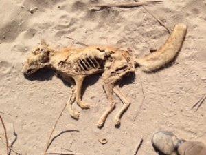 Die Wüste ist unerbittlich. Im Winter tagsüber immer über 30 Grad, da kann man sich vorstellen,, dass das Überleben im Sommer jedem Organismus das Maximum abfordert.