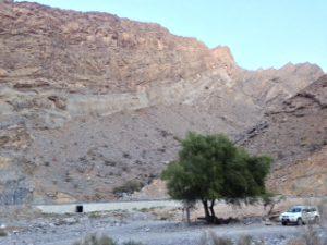 Die richtige Stelle für den Omankauz ist bei Tageslicht schon mal ausgekundschaftet. Bei Neumond ist es nachts dann ja auch zappenduster.